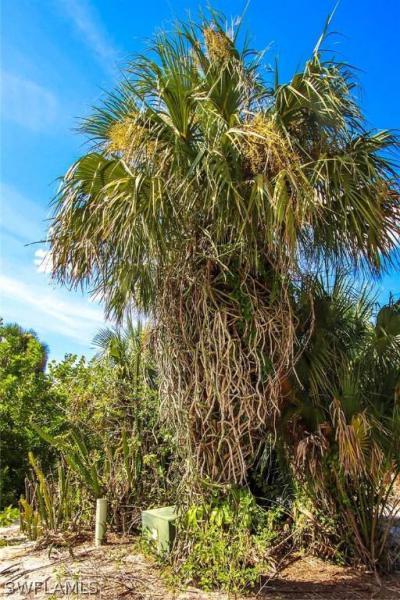 Beautiful Island , Fort Myers, Fl 33905